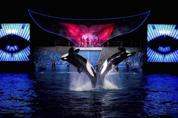 "Scene from ""Shamu Rocks,"" a nighttime killer-whale show that's part of SeaWorld Orlando's Summer Nights programming"