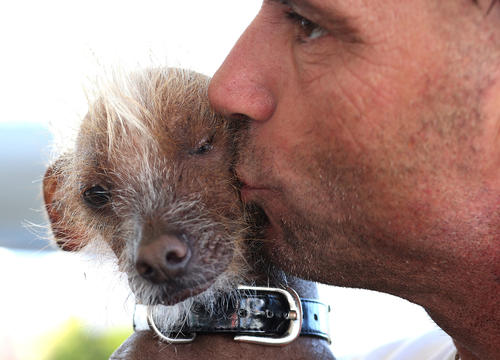 Jon Adler kisses his dog Icky, a Chinese Crested,  before the start of the 25th annual World's Ugliest Dog contest at the Sonoma Marin Fair on June 21, 2013 in Petaluma, Calif.