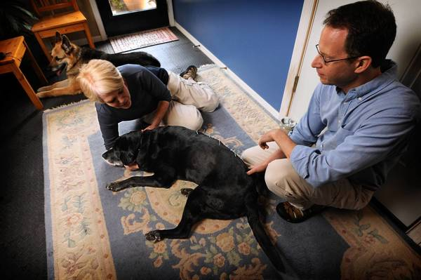 Fred Wolfson, a Mount Washington acupuncturist who usually treats humans but also works on animals, applies needles to black lab Harry, as his owner, Margaret Thompson, provides a comforting touch.