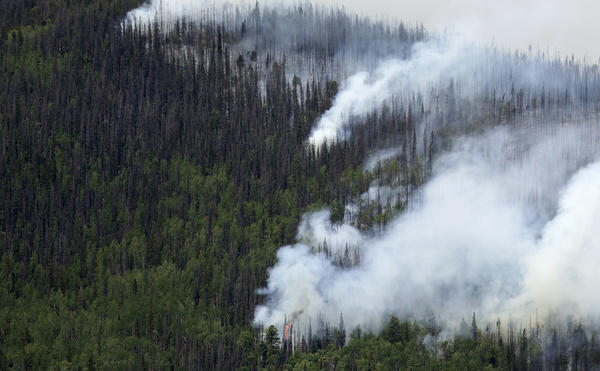 Dead beetle-stricken trees burn along with healthy ones along Highway 149 west of Creede, Colo., on Monday.