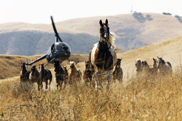 Running horses and helicopter.Wild Horses, a film by Director Stephanie Martin and Cinematographer Robert Richardson.