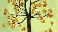 Maple tree in autumn representing the concept of menopause