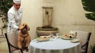Photos: Darby the wheaten terrier