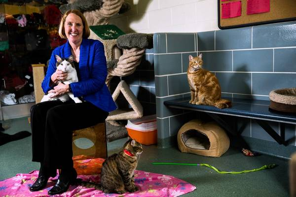 Dr. Robyn Barbiers, president of the Anti-Cruelty Society at their shelter in Chicago on Friday, May 31, 2013.