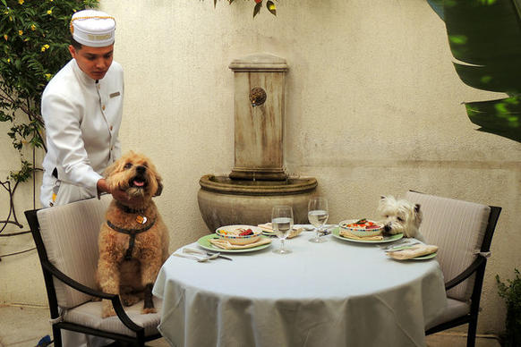 Darby the wheaten terrier, left, and Lillie the West Highland terrier dine in a patio outside their room at the Peninsula Beverly Hills.