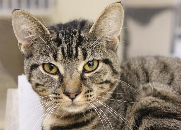 This beautiful young lady would love a new home to call her own.Playful Shortbread would make an excellent friend and companion. Come and visit all the small and furry friends at the Humane Society of Washington County.