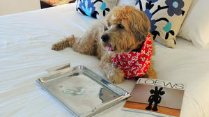 Dog-friendly luxury hotels in Southern California go gourmet