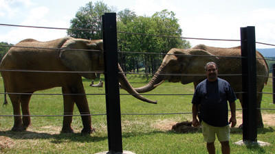 Jody Watkins, the new land manager and elephant keeper at the International Conservation Center, with Surkiri, left, and Thandi.