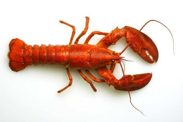 how to cook live lobser