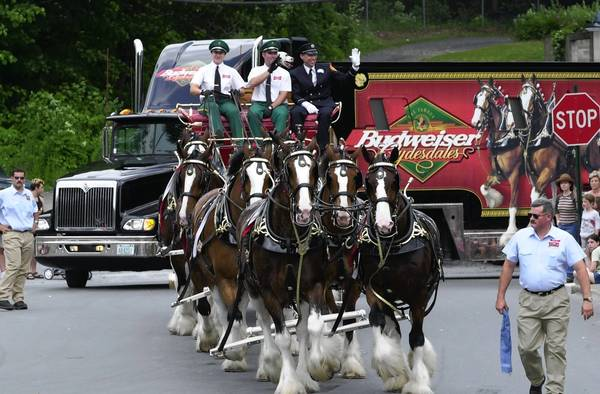 The Budweiser Clydesdales will come to the Lehigh Valley in September.
