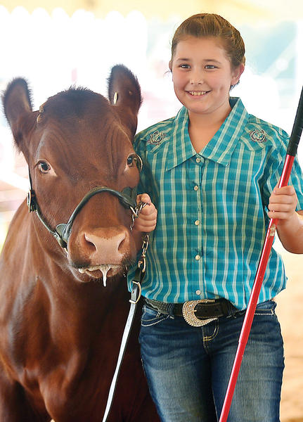 Serena Fisher, 10, of Chambersburg, Pa., competes in the novice showmanship class of the 4-H/FFA Junior Steer show Tuesday at the Franklin County Fair in Chambersburg.