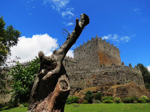 The grounds of Sotomayor Castle  in Spain's Galicia region include ancient trees and dried trunks, many as old as 800 years.