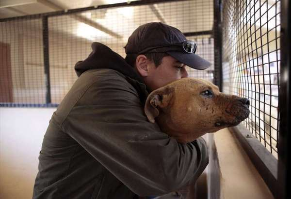 Lucas, a pit bull used in the Michael Vick dogfighting operation, gets a hug from assistant dog care manager John Garcia at Best Friends Animal Sanctuary in Utah in 2009.