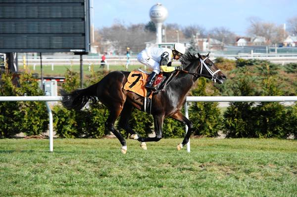 contributed photo Rydilluc, who is running in Saturday's Virginia Derby, pulls ahead to win at Aqueduct on Nov. 23, 2012.