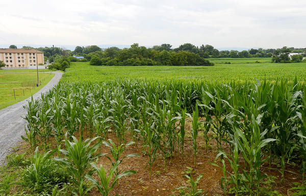 This cornfield just south of The Sleep Inn and The Cracker Barrel on the west side of Sharpsburg Pike near Hagerstown is the proposed site of a new Walmart.