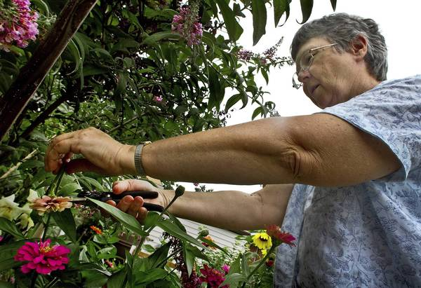 Melinda Webb of Hampton uses compost in her backyard garden to improve plant growth.