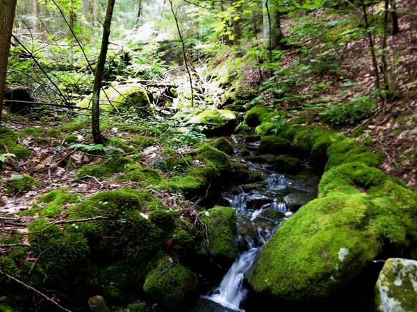 An unnamed stream flows over moss-covered boulders and chasms through the Surdom Property in New Hartford.