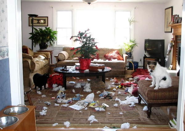 "File photo: Tackle, a Jack Russell terrier, shows no remorse after redecorating the living room of his home in Marlborough. This photo by owner Tom Anderson shows only part of his work, which included destroying a foam cat house. Tackle was asked to leave his original home because of generally bad behavior, Anderson said. He has destroyed blankets, pillows and rugs; dug holes under fences and throughout his yard; forced the construction of fences around gardens; tries to mate with guests of all species and generally has an opinion about everything. Still, Anderson said,Tackle is ""our best buddy.''"