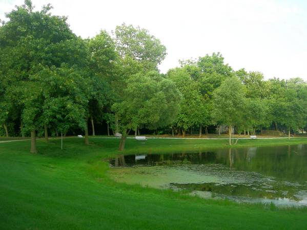 Willow Pond Park in Willowbrook is one of the places where Willowbrook will begin cutting ash trees on public property and parks.