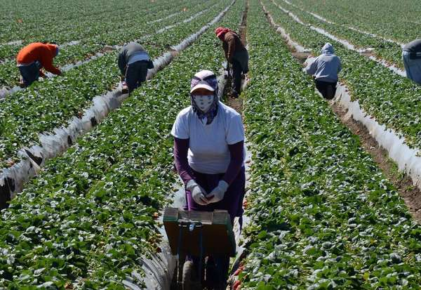 The House Committee on Homeland Security has approved measures dealing with border security, E-Verify, interior enforcement, highly skilled immigrants and an agricultural guest worker program. Above: Migrant workers harvest strawberries at a farm near Oxnard, Calif.
