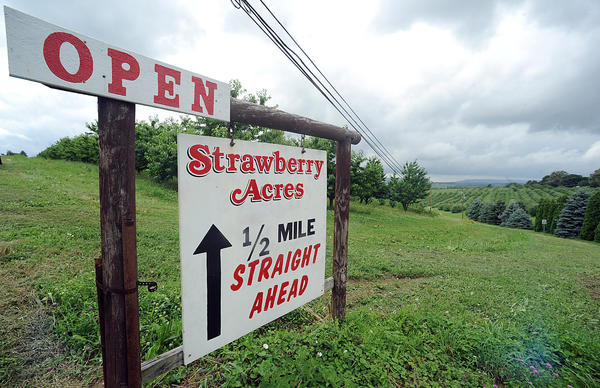 Strawberry Acres Farm at the corner of Clearview and Overlook Roads in North Whitehall Township Wednesday afternoon. ///// ED NOT////// Kevin Mingora/The Morning Call. Strawberry Acres Farm along Overlook Road North Whitehall Township Wednesday afternoon July 03, 2013.