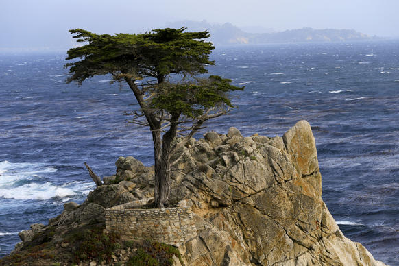 Carmel, as this city is commonly called, has the lowest unemployment rate, which stands at 1.4%. Above, the Lone Cypress of Pebble Beach, Calif., an attraction for visitors staying in nearby Carmel.