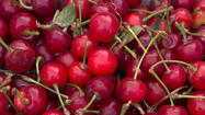 Farmers Markets: Fresh sour cherries are hard to find