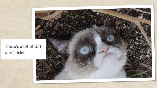 "An image from ""Grumpy Cat: A Grumpy Book"""