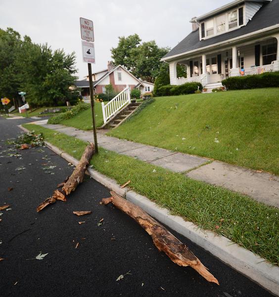 A huge limb on Hamilton Blvd. after Friday evening's storm.