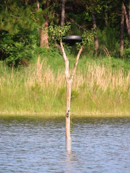 A pruned crape myrtle limb finds new life in the middle of the lake.