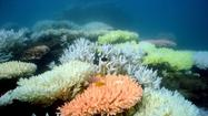 U.S.-Australia war games bomb Great Barrier Reef, stirring uproar
