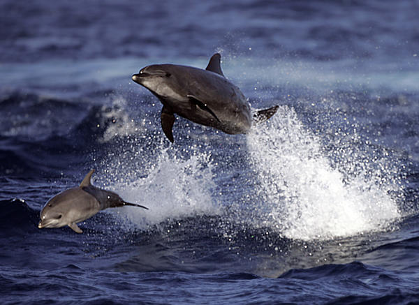 "A study published Monday in the Proceedings of the National Academy of Sciences found that bottlenose dolphins address each other using ""signature whistles"" -- indicating that other species came up with names for individuals before humans did."