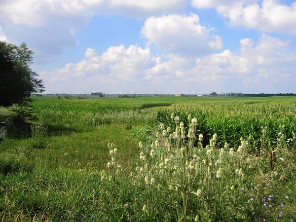 The Illinois Tollway plans to fund renovations at Orland Grassland South, helping to turn it into a nature preserve. Above, crops currently grow on much of the 162-acre site.
