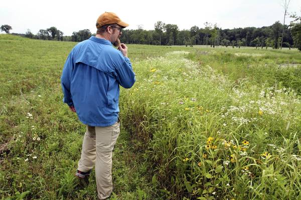 Ben Cox, president of Friends of the Forest Preserves, tours part of the Deer Grove Forest Preserve in Palatine this month.