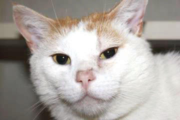 Sly is a wonderfully, sweet boy who loves to play. He is a smart adult cat and is still quick to learn. He is funny and would make a great cat for any home. Stop by Petco, 17235 Cole Road, Hagerstown, and visit with him.