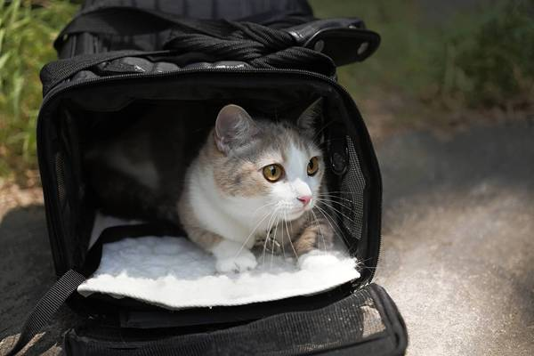 This cat is in a pet carrier suitable for evacuation. Newport News Fire Department is urging residents to make advance emergency plans that include care for their pets.