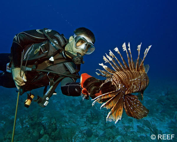 A diver is pictured with a lionfish in this handout photo from Reef Environmental Education Foundation.