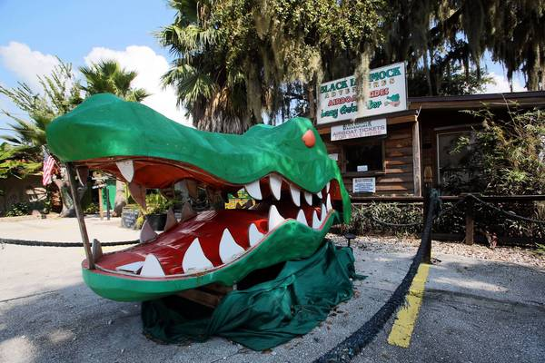 A large alligator snout greets visitors at a ticket booth at Black Hammock Adventures on Lake Jesup.
