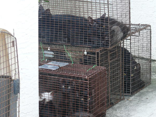 Port St. Lucie Animal Control rescued these cats from a home Monday, police said.