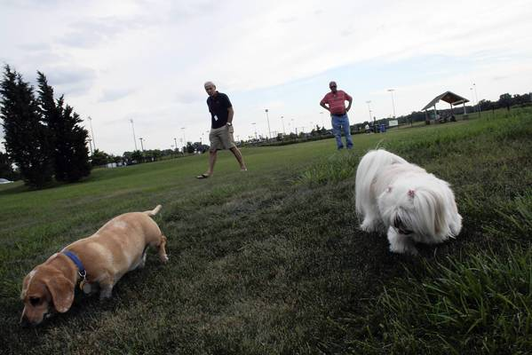 Molly, 3, right, and Charly, 5, left, play at Glenview's dog park on July 25 while their owners, Steve Gold and Rick Smith, chat in the background. Northbrook is scheduled to get its own dog park sometime this fall.