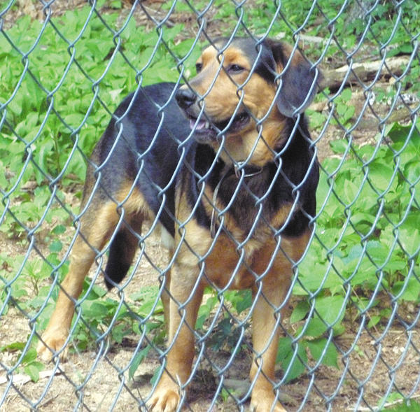 This dog was found near the intersection of Jefferson Boulevard and Robinwood Drive in Hagerstown.