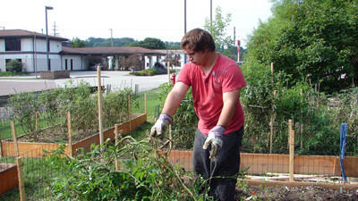 Steven Maher, Somerset, pulling out tomato plants from the community garden at the Community Action Partnership for Somerset County/Tableland Services Inc. building.