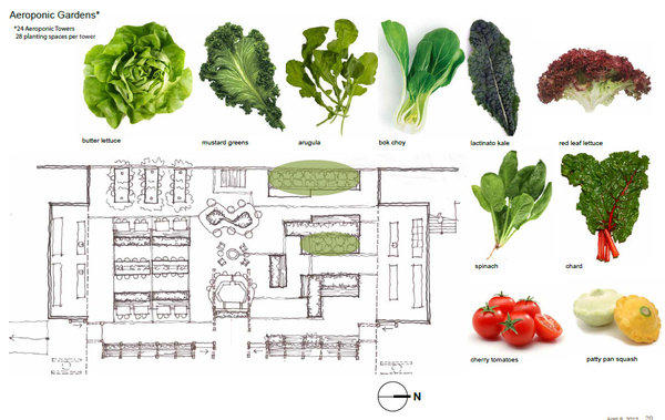 The aeroponic gardens at AT&T Park will have 24 towers with edibles such as spinach, butter lettuce, arugula, cherry tomatoes and chard.
