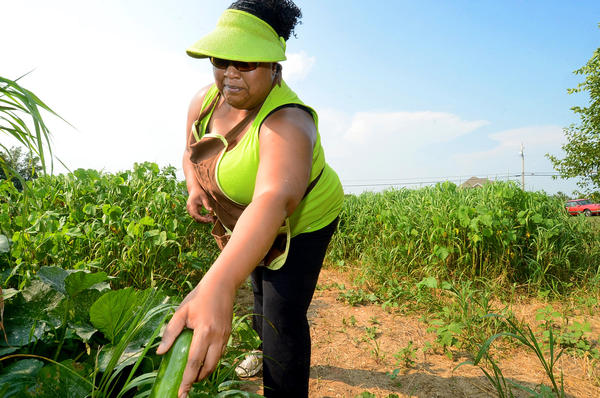 Jametta McDaniel picks zucchini in the Clear Spring Community Garden on Clear Spring Road.