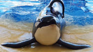 End the killer whale circus
