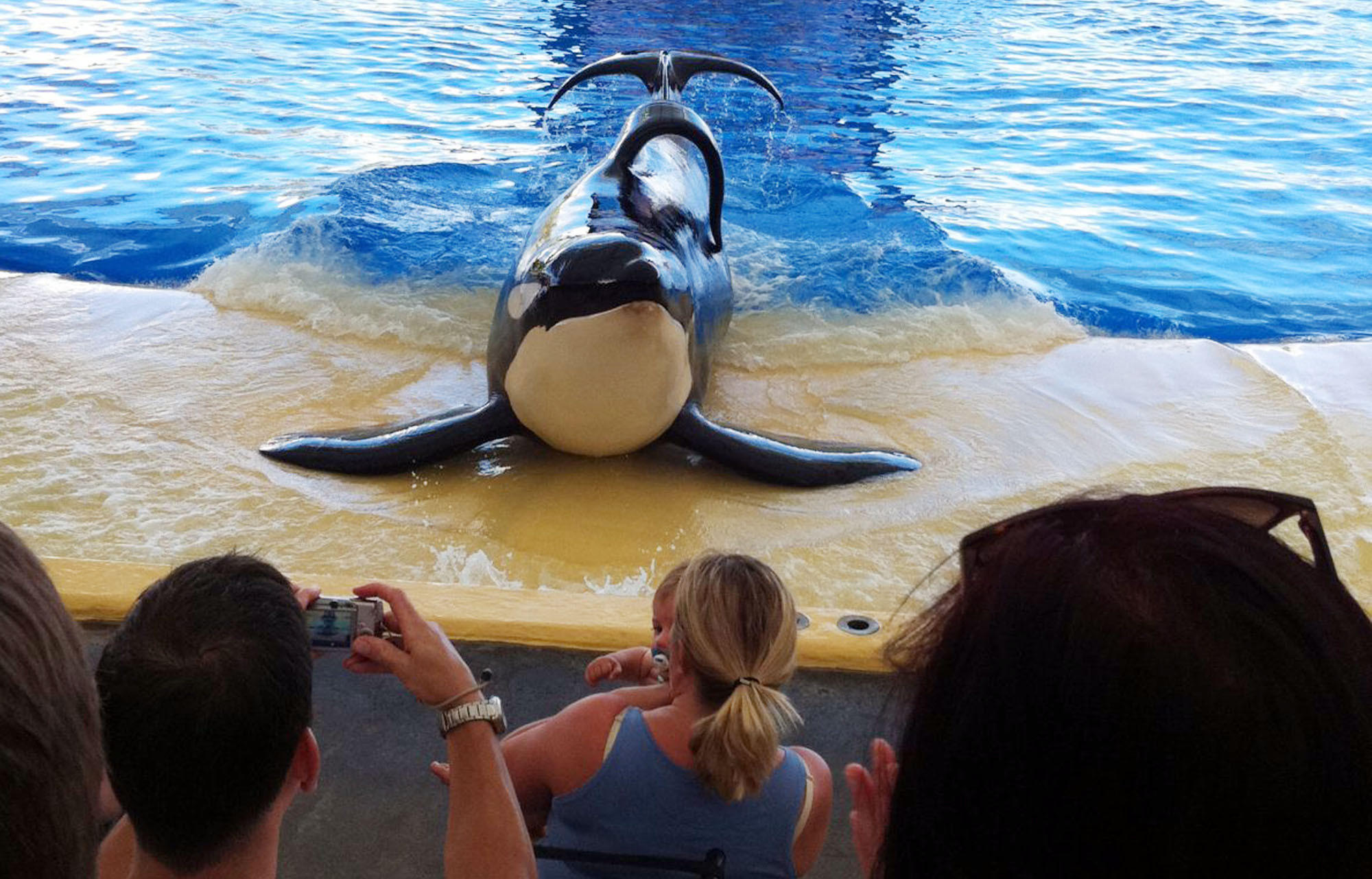 "A scene from the documentary movie ""Blackfish."""