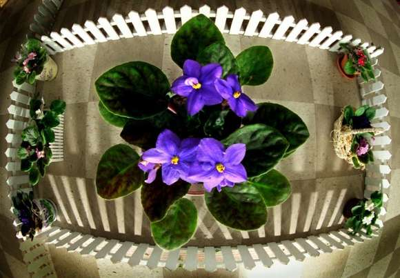 New research pinpointed the exact mutation that allows you to smell violets.