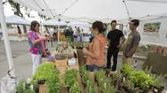 Farmers Markets: Redlands' Saturday morning gathering impresses