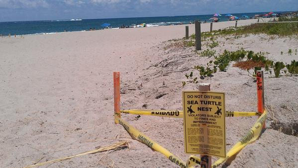 Federal regulators are raising concerns that sea walls proposed along Palm Beach County's shoreline could threaten sea turtle habitat.