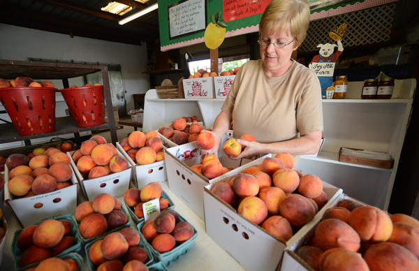 Barb Grossnickle fills boxes of fresh local Loring and Red Haven Peaches ready for sale at Ivy Hill Farm produce stand in Smtihsburg.